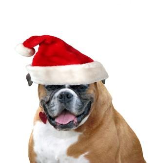 christmas-dog-santa-hat-1380574690wta
